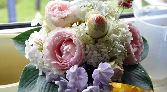 Bald kommt der Sommer….. und die Hortensien…