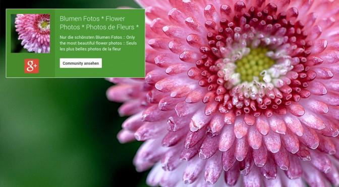 Die schönste Blumen Community bei google+