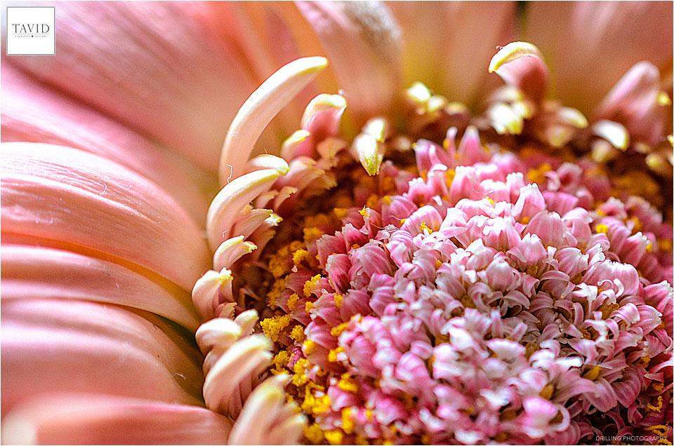 Blumen sind einfach schön