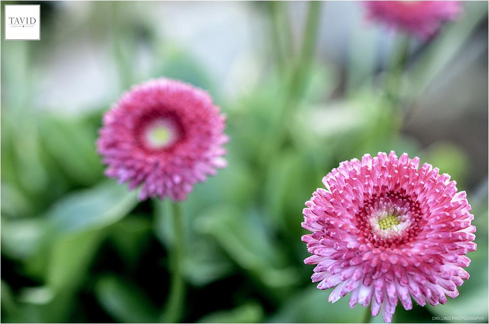 Farbenfreude am Blumenmeer